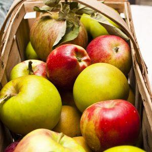 Manfaat buah apel untuk kesehatan dan diet